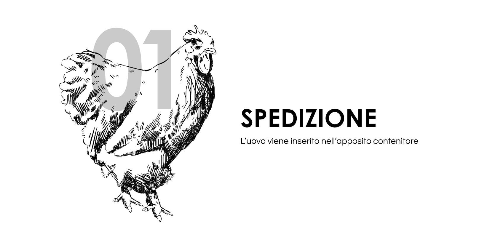 Disegno di una gallina su sfondo bianco